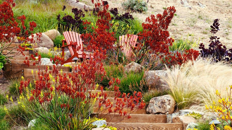 Southern California September Garden Checklist Sunset Magazine