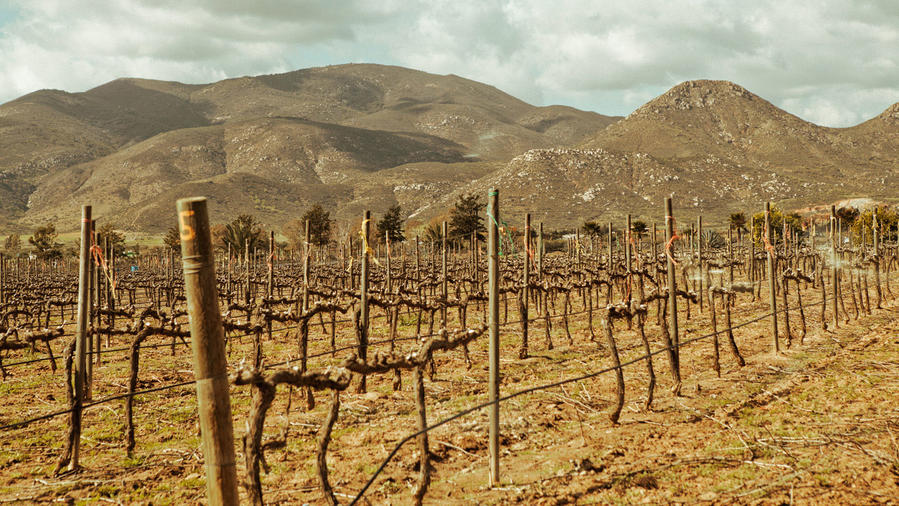 Valle de Guadalupe vineyards