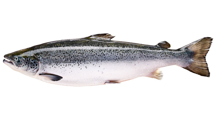 Feel-good farmed salmon