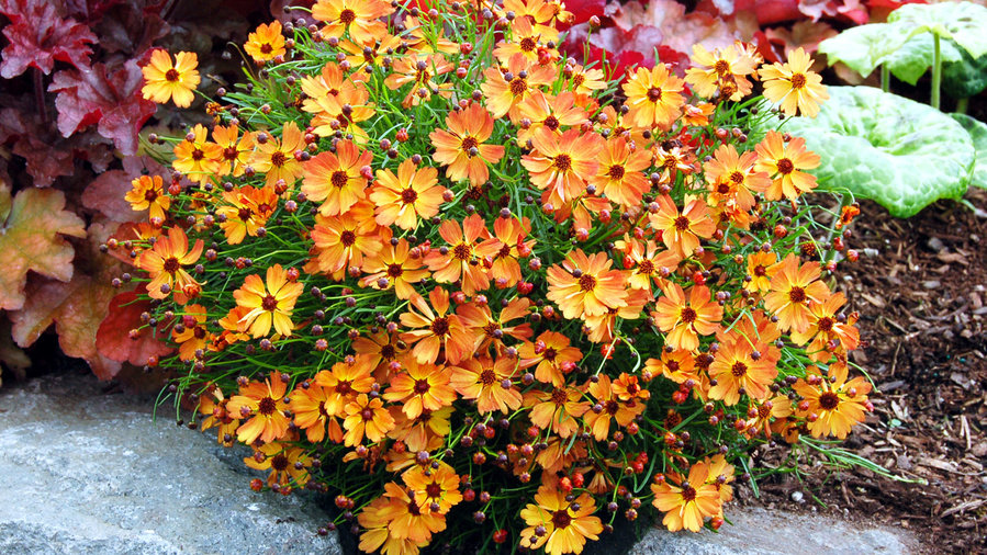 20 Best Perennial Flowers Sunset Magazine