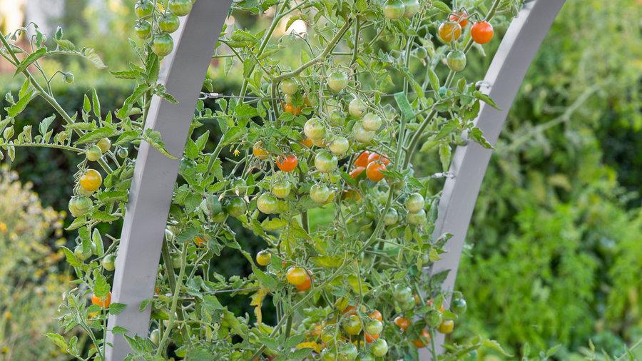 12 Great Backyard Farm Ideas - Sunset Magazine - Sunset ...