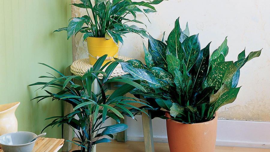 House plants for low light<br />