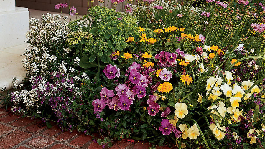 Colorful annuals