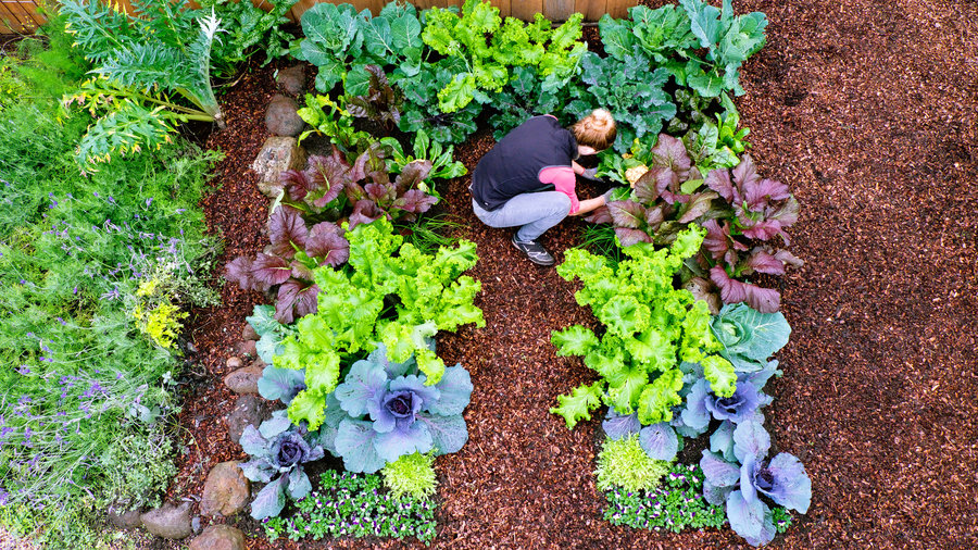 Plant a cool season vegetable garden sunset magazine for Garden box vegetable layout