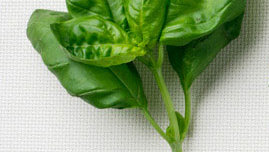 Cooking with fresh basil