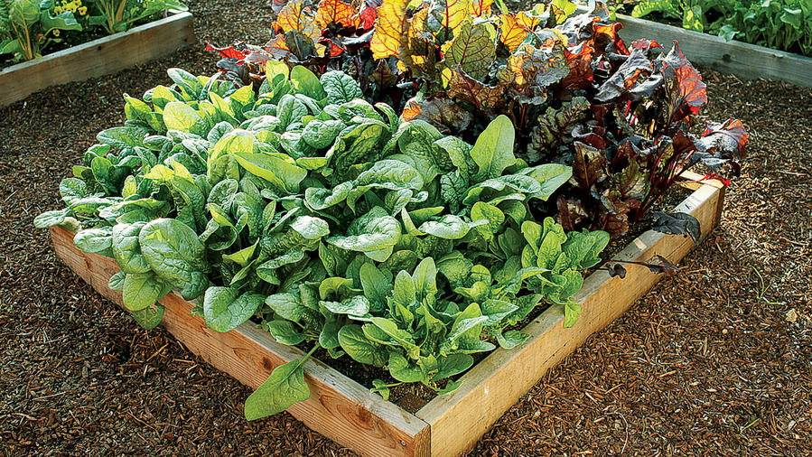 Greens you'll love to grow
