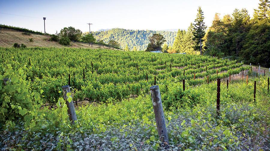 Humboldt, CA: Elk Prairie Vineyard
