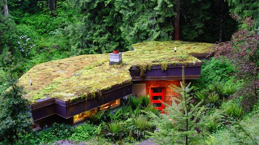 Moss roof garden