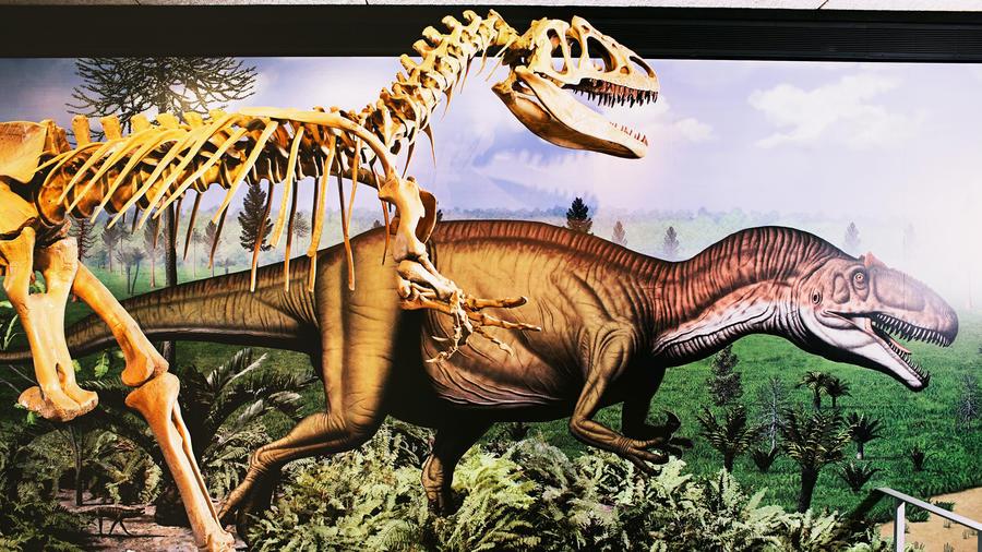 Dinosaur National Monument