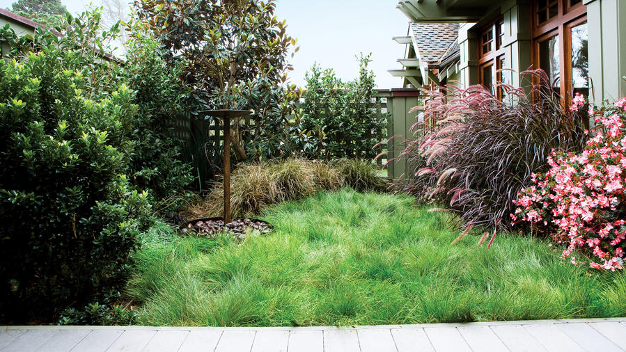 Plant A No Mow Lawn Sunset Magazine