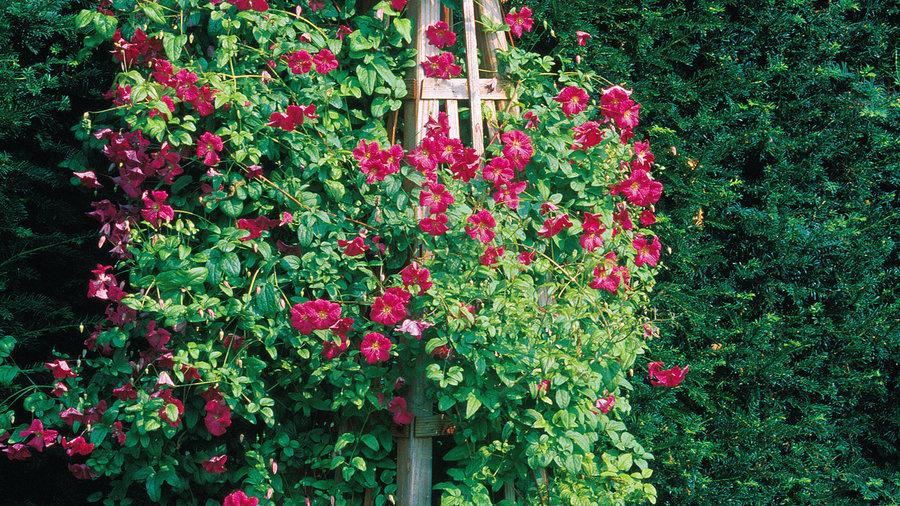 DIY garden obelisk
