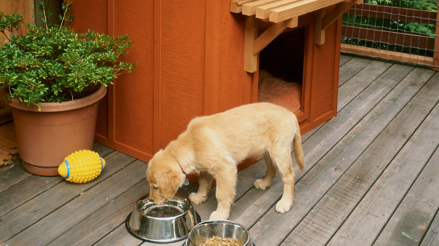 Free plans: Build a stylish dog house