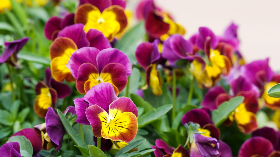 17 Best Plants for Cool-Season Color