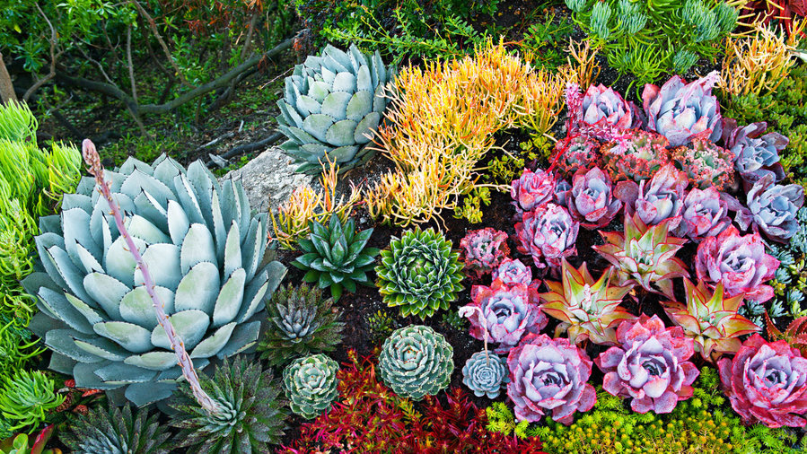 How To Create A Sea Creature Succulent Garden Sunset