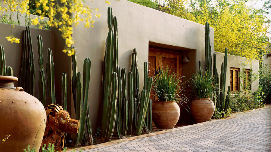 Southwest style: Cactus on guard