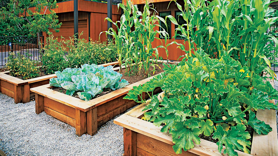 veggies up front sunset magazine rh sunset com backyard vegetable garden tips backyard vegetable garden ontario
