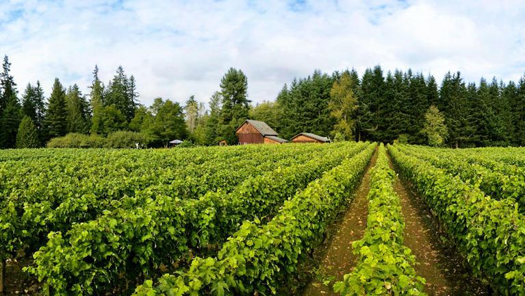 5 Wine Regions to Suit Global Tastes