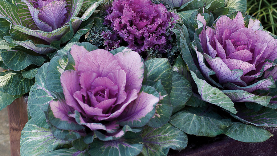Best Winter Flowers For Color Sunset Magazine