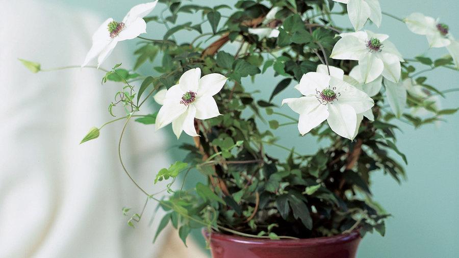 gift plants