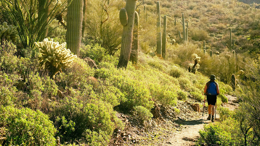 Woman hiking through lush desert landscape in Superior, AZ