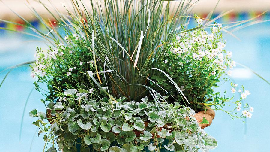Plant a cool pot