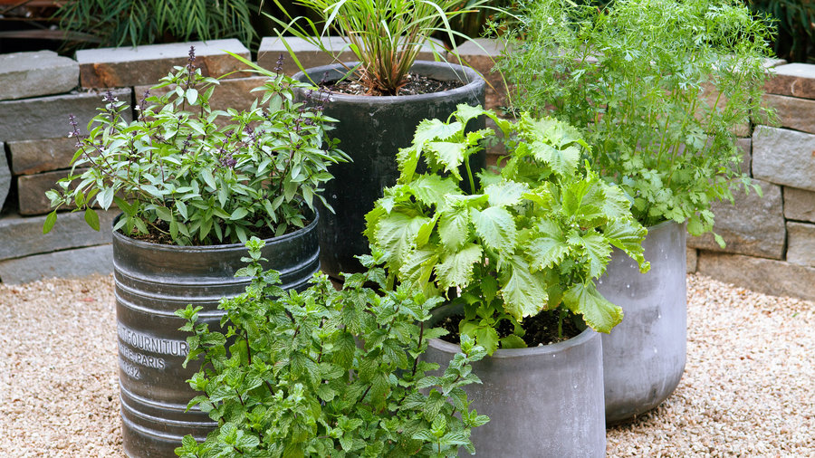 Beautiful Herb Garden Designs - Sunset Magazine