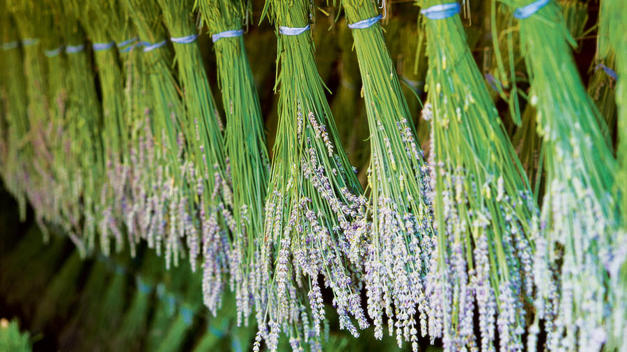 Your Ultimate Guide To Planting And Growing Aromatic Lavender