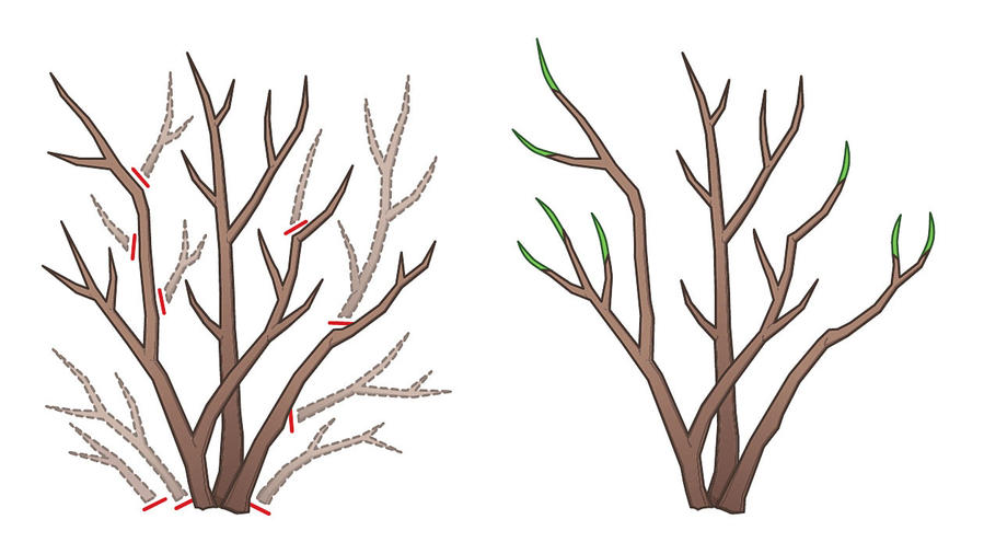 Basic pruning cuts