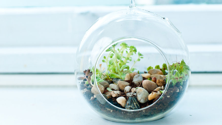 Favorite Terrarium Plants Sunset Magazine