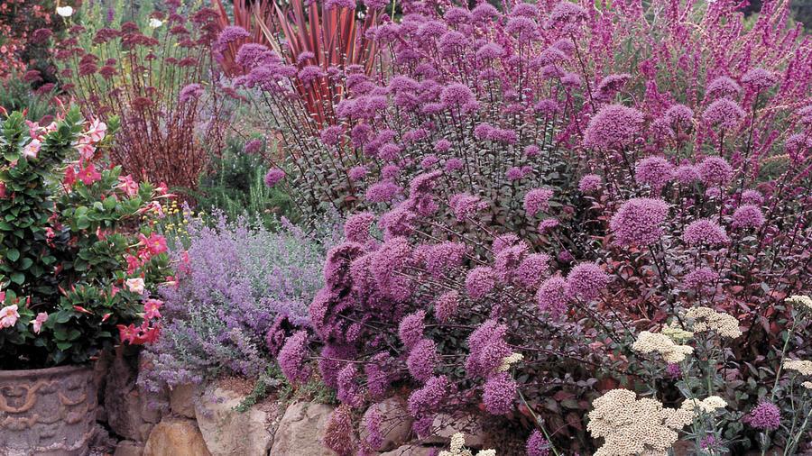Gauzy textures, gutsy plants