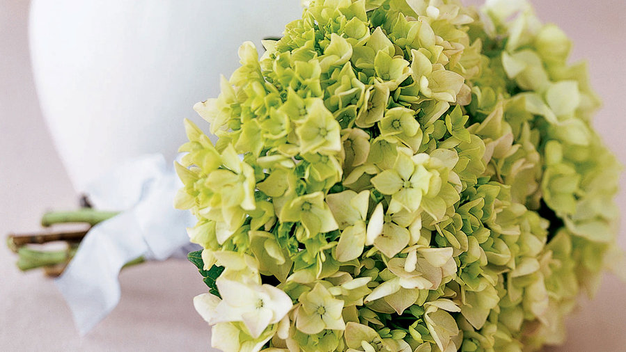 Grow a bouquet of hydrangeas