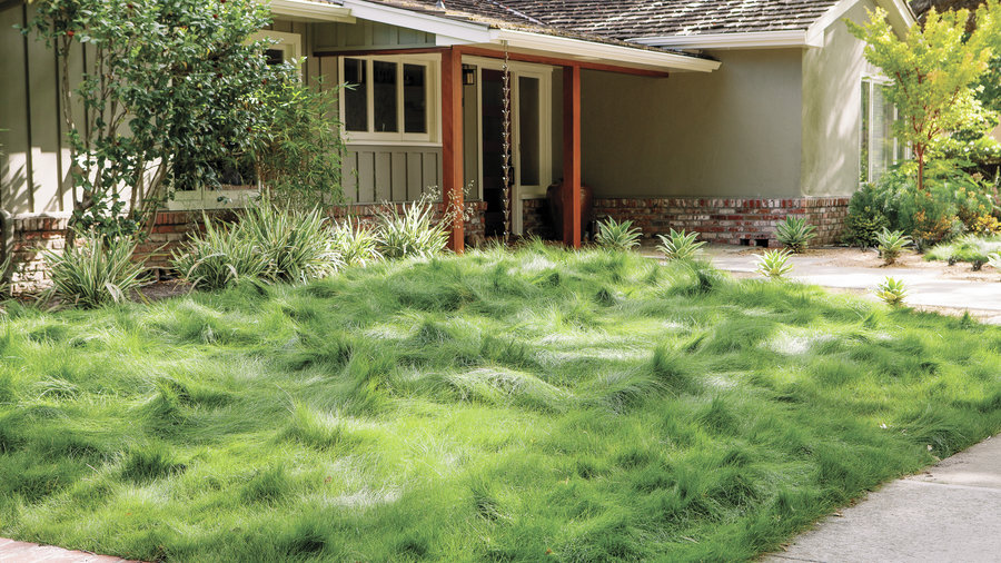 drought-tolerant groundcover