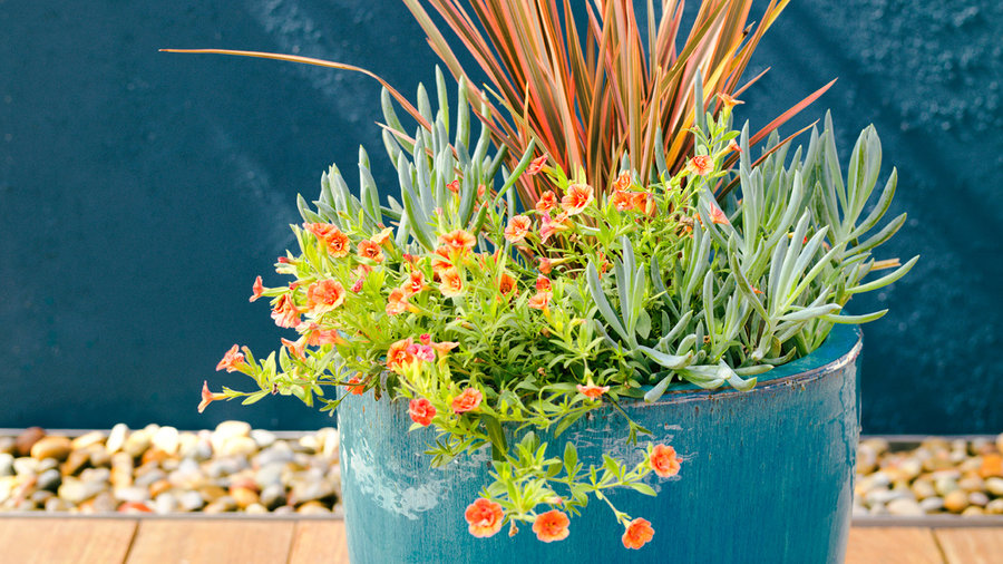 drought tolerant container plants sunset sunset magazine. Black Bedroom Furniture Sets. Home Design Ideas