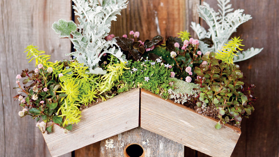 11 Stylish Projects With Succulents Sunset Magazine