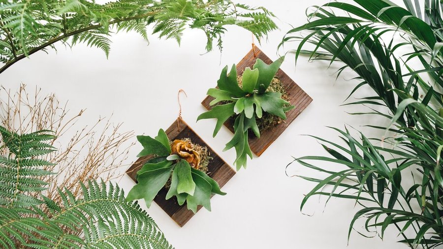 10 Ways to Decorate with Staghorn Ferns
