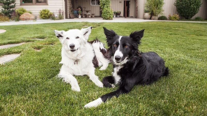 Two dogs at a dog friendly vacation in Walla Walla