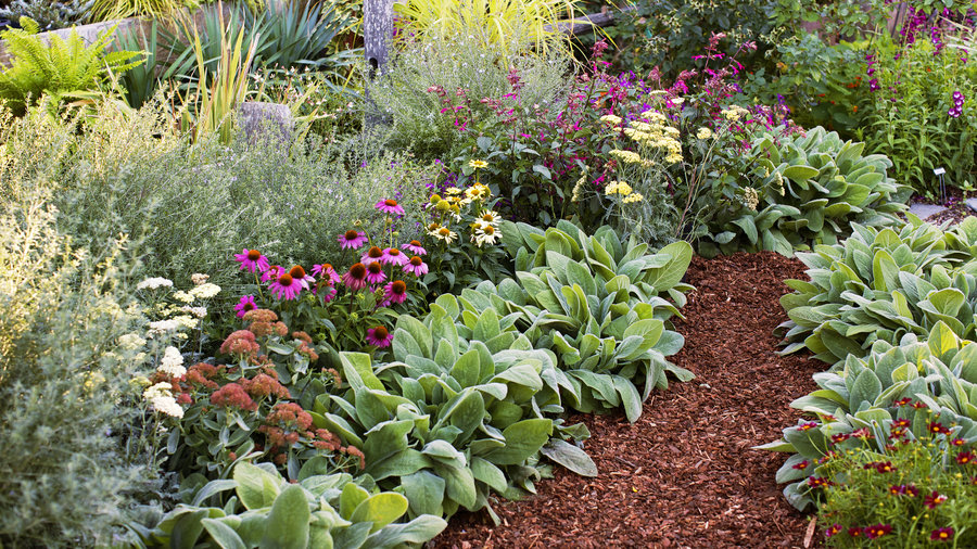 Guide to low maintenance gardening sunset magazine for Easy care flowers for garden