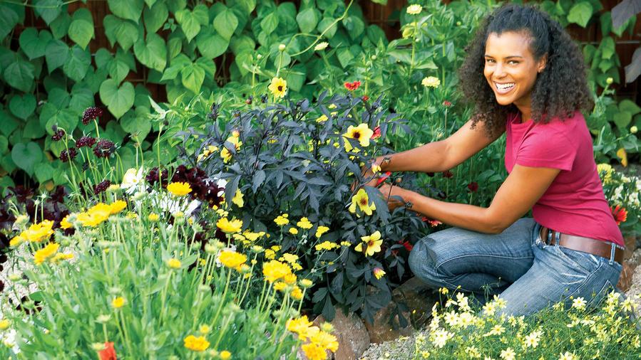 Hot-color flower garden