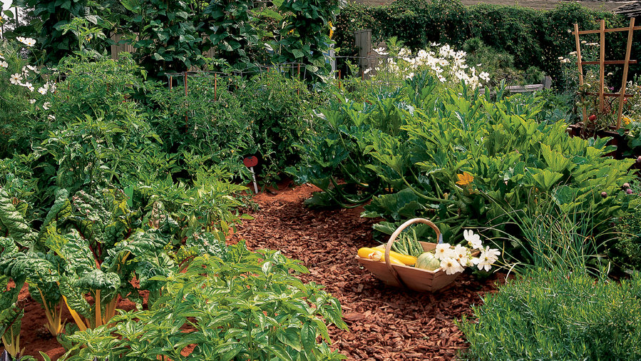Keyhole vegetable garden