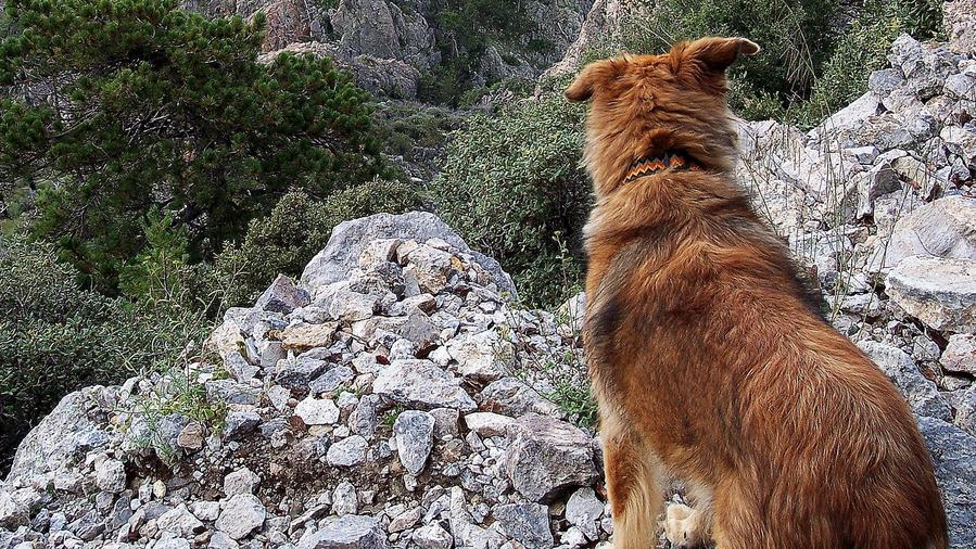 Dog-Friendly vacation to Madera Canyon