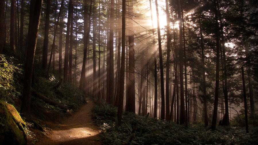 The woods at Chuckanut Ridge Trail, Chuckanut Mountain Park near Bellingham