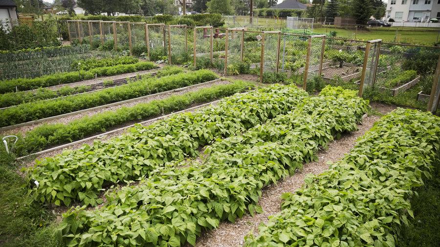 Great Tips to Start a Community Garden - Sunset Magazine