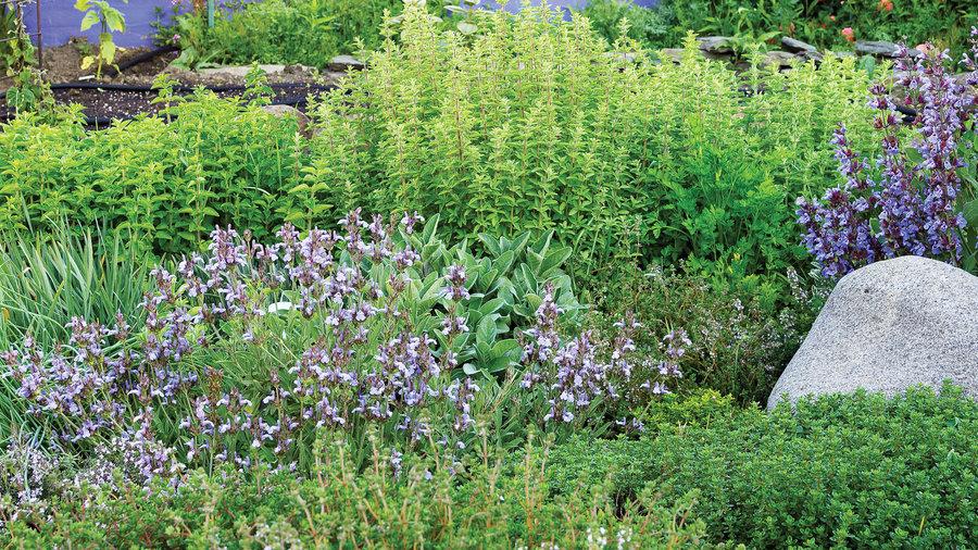 Grow unthirsty herbs