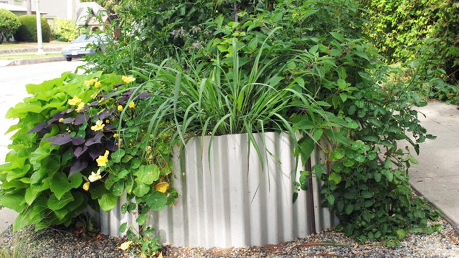 How to build a corrugated metal raised bed - Sunset Magazine Raised Perennial Garden Designs Metal on raised flower beds, raised succulent garden, raised water garden, raised stone garden, raised tree garden, raised butterfly garden, raised shade garden, raised garden plants, raised berry garden, raised cactus garden, raised garden bed, raised container garden, raised rose garden, raised fire pit, raised rock garden, raised iris garden, raised herb garden, raised cottage garden, raised garden design, raised vegetable garden,