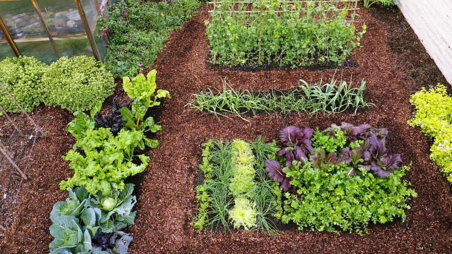 Rows Garden Layout