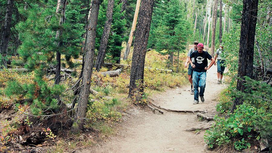 Teton woods
