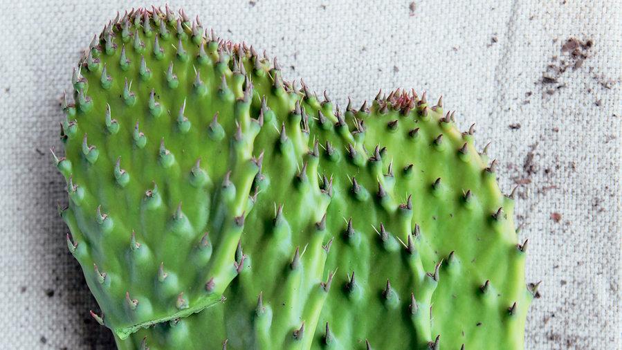 8 Exotic Plants - Sunset Magazine