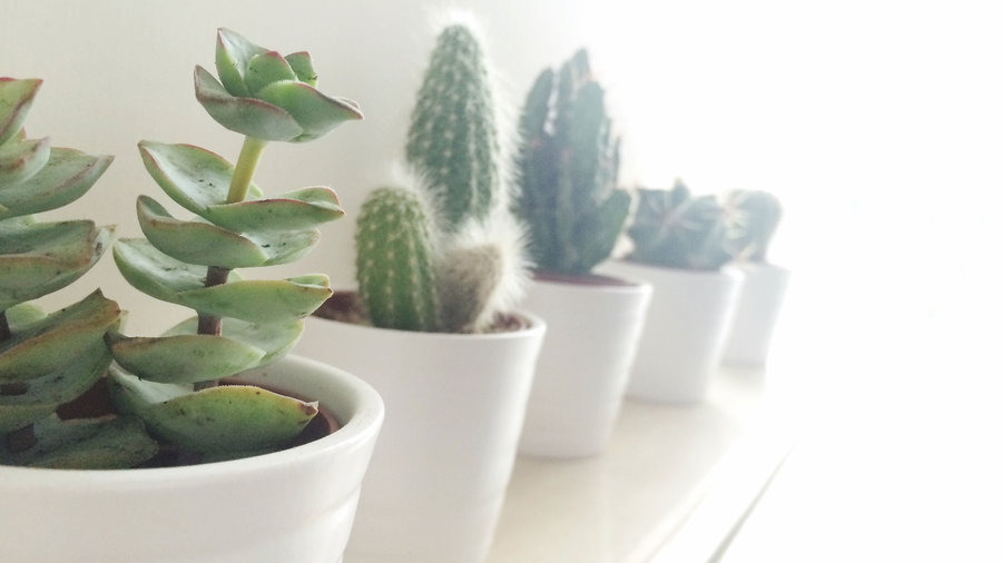 10 Succulents That Thrive Indoors
