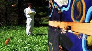 The beekeeper behind Neil Gaiman's bees