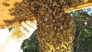 Letting go the hive